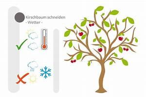 Hohlkehlleisten Auf Gehrung Schneiden Anleitung : kirschbaum schneiden bebilderte anleitung f r den ~ Lizthompson.info Haus und Dekorationen