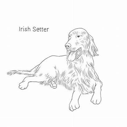 Irish Setter Dog Breeds Drawing Facts