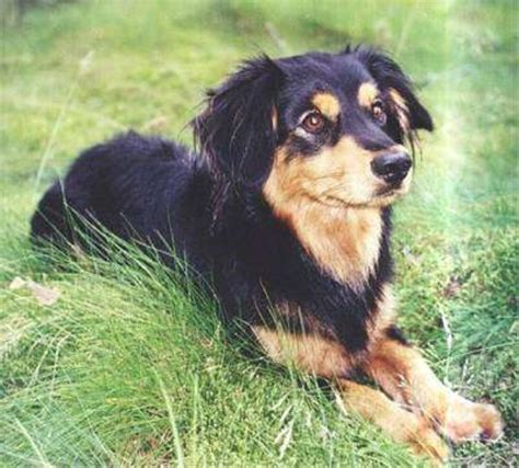 cool large dog breeds that don t shed dog breeds puppies