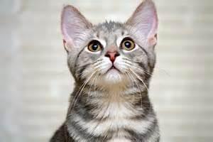 happy cat advice greengato