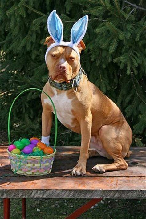 funny easter pictures  pics