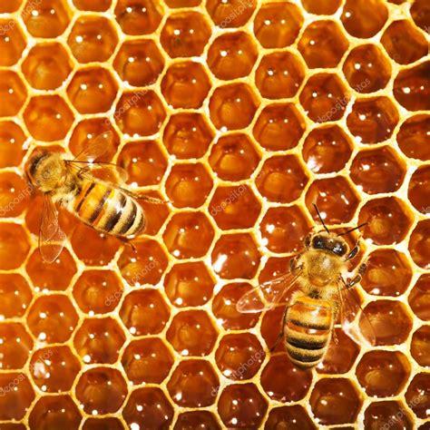 Trabalho de abelhas no favo de mel Fotografias de Stock