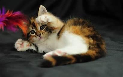 Funny Cat Wallpapers Desktop Kitten Kittens Lol