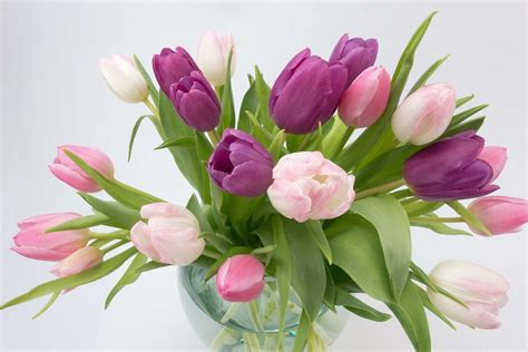 Welche Vase Für Tulpen by Tulpen In Der Vase 5 Tipps F 252 R Eine L 228 Ngere Tulpenbl 252 Te