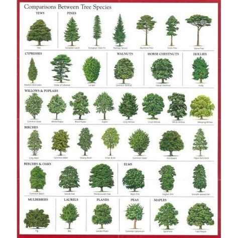 comparisons  tree species good education