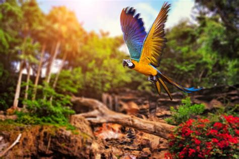 animals, Parrot, Birds Wallpapers HD / Desktop and Mobile ...