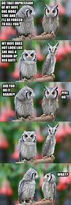 evening jokes 20 pics