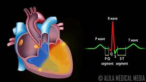 Cardiac Conduction System And Understanding Ecg  Animation