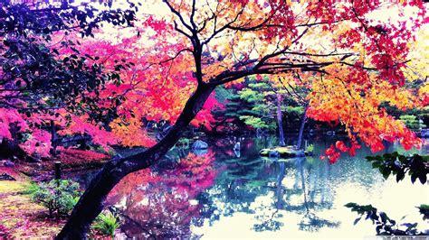 fall  japan  hd desktop wallpaper   ultra hd tv