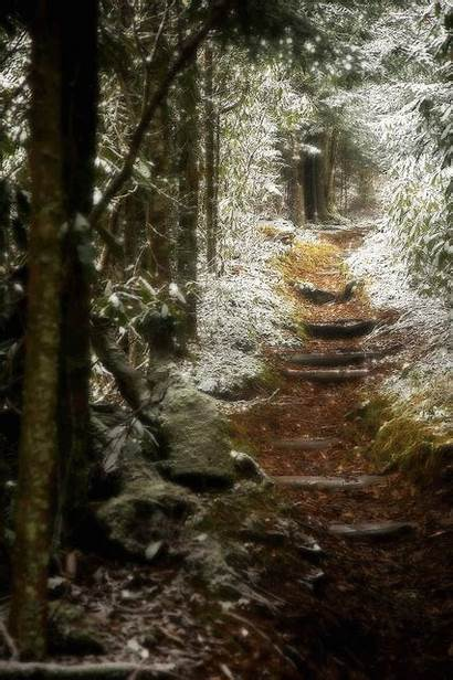 Forest Trail Path Winter Mountain Woods Nature