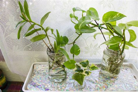grow ls for indoor plants stylish house plants that grow in water growing your