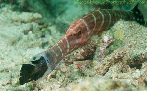 photographing behavior underwaterunderwater photography guide