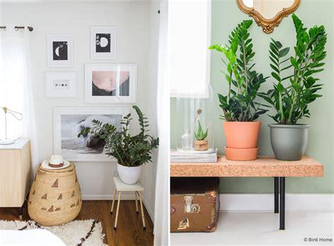 plante verte bureau une plante exotique oui mais laquelle mademoiselle