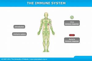 The Immune System  U2014 Science Learning Hub