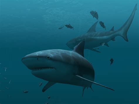 Animated Shark Wallpaper - fish 3d screensavers sharks animated wallpaper
