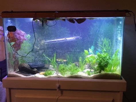 fish aquariums decorations big fish tanks for sale with exciting and