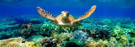 finally  heard  great barrier reef