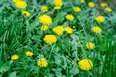 Unkraut Schnell Entfernen by Unkraut Schnell Entfernen Probleme Mit Dem Rasen Diese