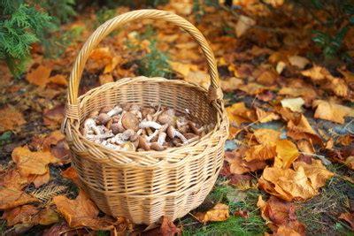 Pilze Im Garten Oktober by Anleitungen Im Bereich Garten Zum Thema Chignons Pilze