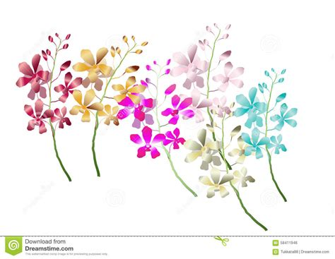 Vector Illustration Of Orchid Flower Branch Cartoon Vector
