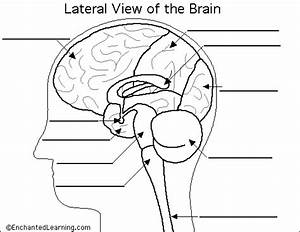 Label Brain Diagram Printout
