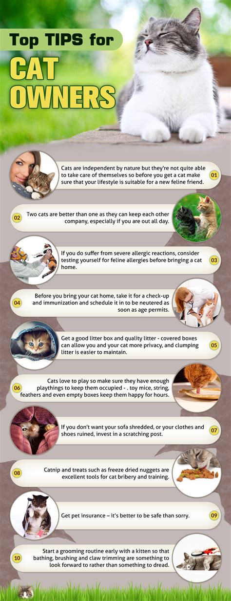 best for cat owners 10 top tips for cat owners best cat care