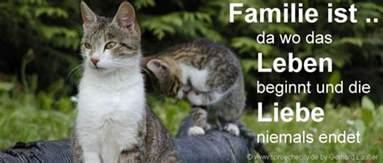 kurze sprüche familie lustige familien sprüche kurze gute zitate witzige wahre weisheiten