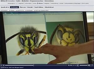 Wie Vertreibe Ich Wespen : wespen im neuen blog begr t sie jan reichow ~ Orissabook.com Haus und Dekorationen