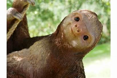 Sloth Sid Climbing Hanging Garden Transparent Sn