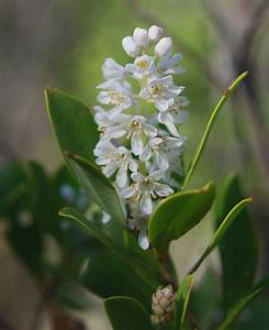 White Star Flowers in Cluster (page 3) - Pics about space
