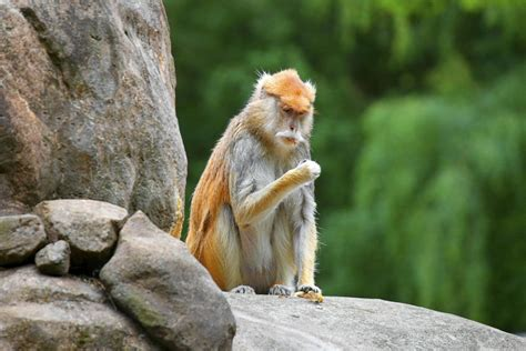 Facts About Old World Monkeys You Gotta Read