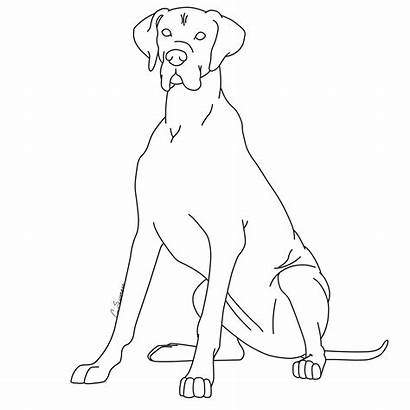 Dane Coloring Drawings Clipart Colouring Doodle Kennels