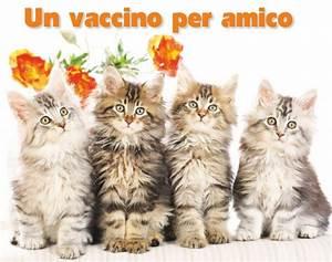 Il vaccino per i gattini