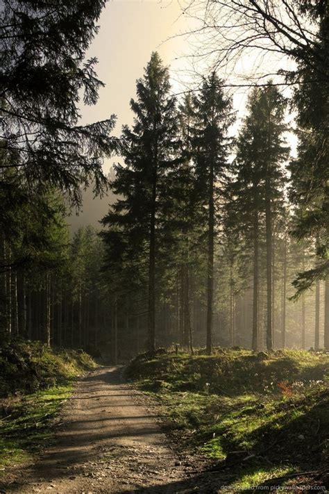 Top view of dark green forest landscape wallpaper art. Dark Forest iPhone Wallpaper - WallpaperSafari