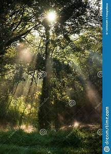 Foggy, Morning, In, A, Swamp, Forest, With, Beautiful, Sunlight, Stock, Image