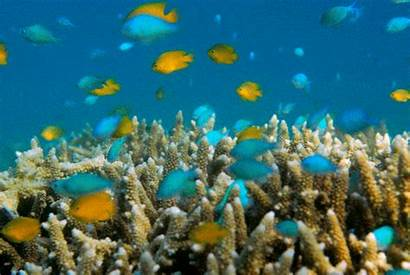 Reef Coral Barrier Before Bleaching Destruction Showing