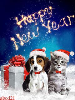 happy  year gif  cat  dog pictures