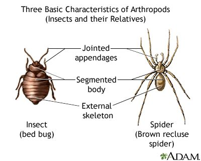 Tarantula spider bite | UF Health, University of Florida