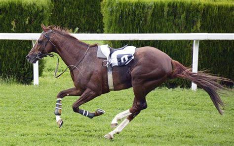 horse run fast running speed facts