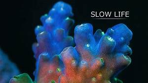 Incredible Focus Stacked Time-Lapse Video of Coral Made Up ...