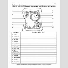 Plant Cell Color Page, Worksheet, And Quiz Ce2 By Bluebird Teaching Materials