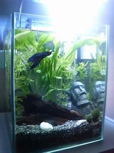 Idee Decoration Aquarium : id e id e d co petit aquarium ~ Melissatoandfro.com Idées de Décoration