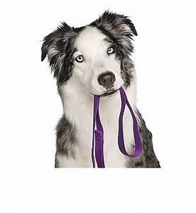 dog training puppy and adult dog training classes petsmart With adult dog training