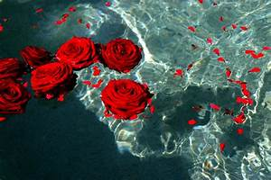 Red roses by Shavari1 on DeviantArt