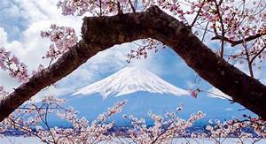 SAKURA – Japanese Cherry Blossom – CultureMagazin com