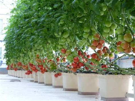 hydroponics dutch bucket wholesale supplier  mumbai