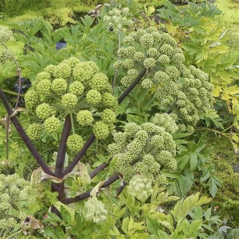 plante anti puceron plante anti puceron liste ooreka