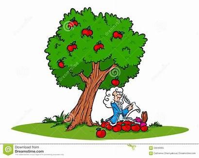 Newton Apple Gravity Tree Law Illustration Cartoon