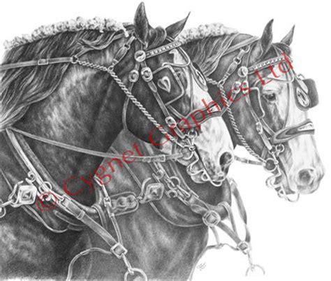 horse drawings  art prints equine artwork  pencil