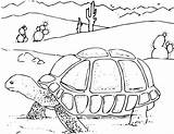 Desert Coloring Pages Turtle sketch template